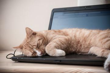 Sen kota na laptopie