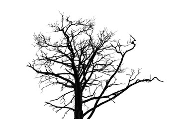 Black leafless tree silhouette isolated on white