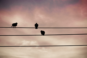 A silhouette of birds on sunset