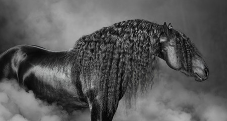Wall Mural - Portrait of black Frisian horse with long mane  in the smoke