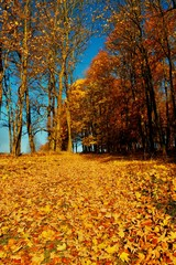 Yellow Orange Autumn Forest, colorful leaves carpet