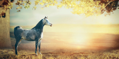 Gray arabian horse over beautiful nature background with big tree,leaves and sunset