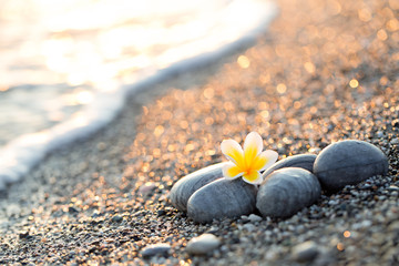 Pebble on the beach with plumeria flower