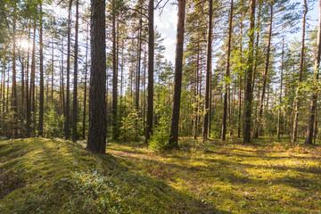 Autumn forest landscape. Colorful forest.