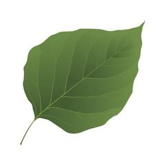 Wall Mural - lilac leaf