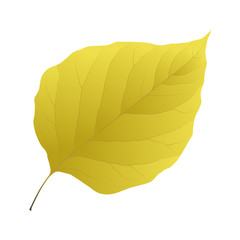 Wall Mural - yellow leaf lilac