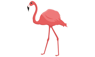 Flamingo On The Zoo
