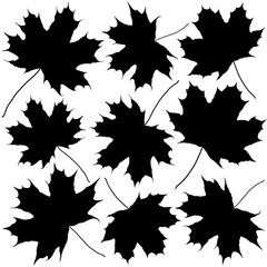 Wall Mural - silhouettes of maple leaves