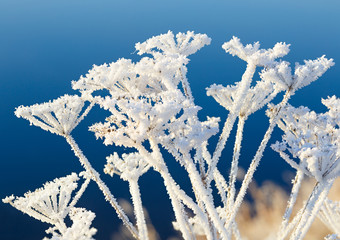 The plant is covered with thick snowflakes. The frozen fog