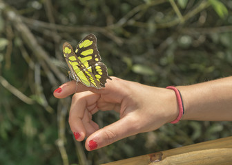 Butterfly Sitting on Woman Finger