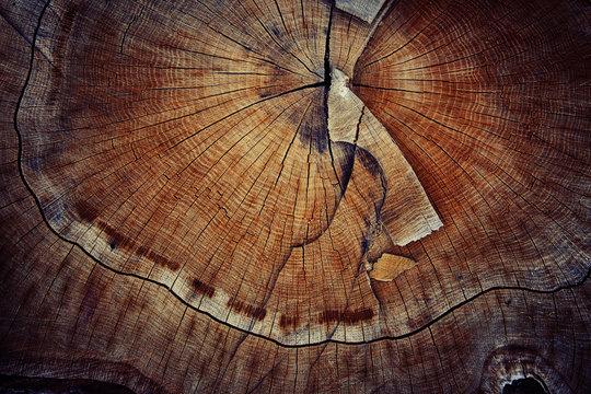 wood cut texture ring
