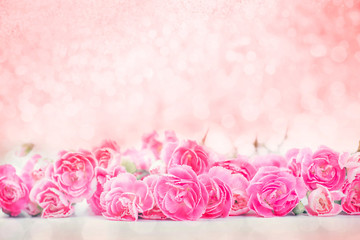 the beautiful blooming pink carnation flowers with sweet bokeh