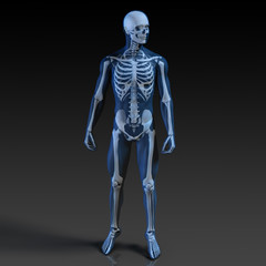 Human Body and Skeleton Anatomy