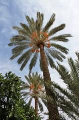 Palmier, Iran