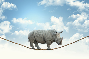 rhino on rope