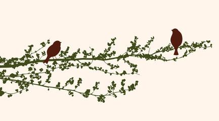 birds in the summer