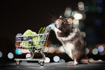 Fotoväggar - Cute rat with a shopping cart