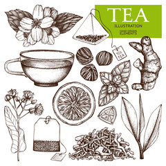 Vector collection of hand drawn tea illustration. Decorative inking vintage tea sketch.