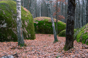 Great boulders in autumn forest. Ukraine