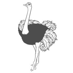 Black and white vector illustration of ostrich