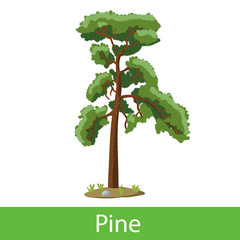 Pine cartoon tree