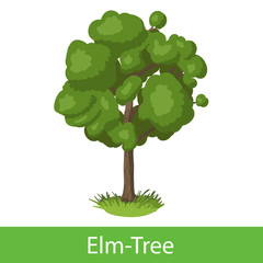 Elm-Tree cartoon icon