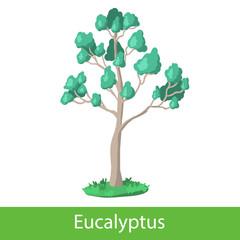 Eucalyptus cartoon tree
