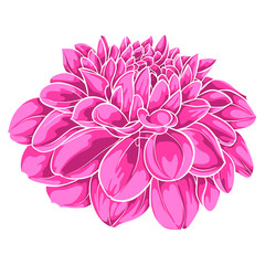 beautiful pink dahlia isolated on white background. for greeting cards and invitations of the wedding, birthday, Valentine's Day, mother's day and other seasonal holidays