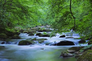 Bode Fluss - Bode river 01