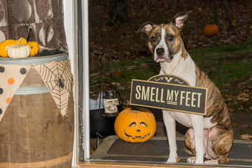Trick or Treat...Smell my Feet