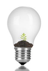 Green eco energy concept. Plant growing inside light bulb, isolated on white