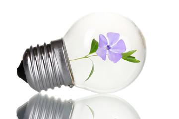 Green eco energy concept. Flower growing inside light bulb, isolated on white