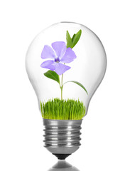 Green eco energy concept. Flower growing inside light bulb, isolated on white