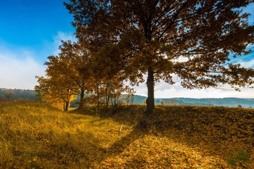 Beautiful autumnal landscape with grassland and trees