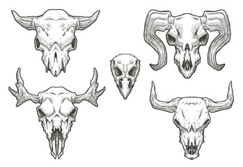 Vector Set of Drawing animal's skulls. Cartoon image of a black and white drawing of skulls of animals: cow, bull, sheep, moose and birds on a white background.
