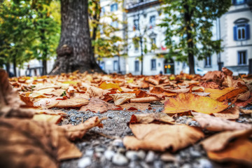 leaves in a park seen from the floor