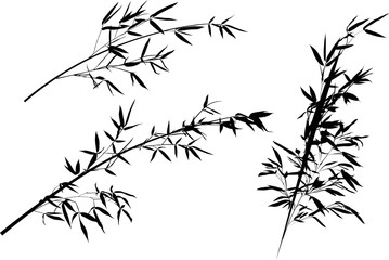 bamboo three black branches collection illustration