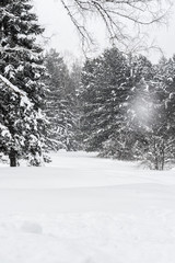 Winter Forest Landscape with Lots of Snow in Russia, Siberia