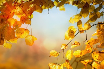 Autumn leaves as background
