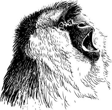 roaring monkey
