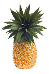 fresh Florida pineapple isolated on white