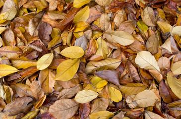 Beautiful yellow rotten leaves background. Autumn foliage