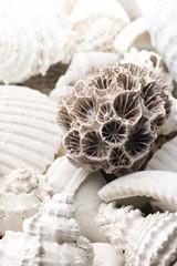 fossilized seashell background