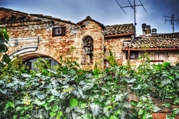 ivy leaves with old buildings on the background