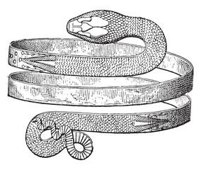 Bracelet spiral snake discovered in Pompeii, vintage engraving.