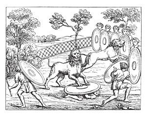 Hunting lions, vintage engraving.