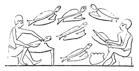 Fishmonger, vintage engraving.