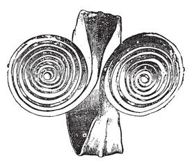 Gallic Bracelet, vintage engraving.