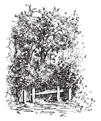 Forest fence, vintage engraving.