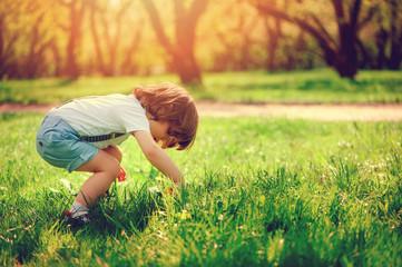 cute toddler boy picking flowers on summer walk